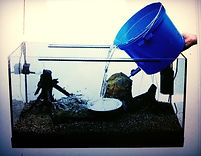 how to fill up aquarium with water