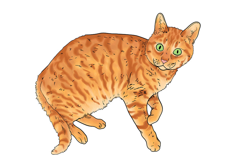 Ginger Cat Pet Portrait Illustration | Pitman Draws
