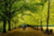 walking image.jpg