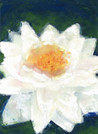 Easter: Water Lily