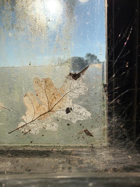 Oak Leaf in Glass