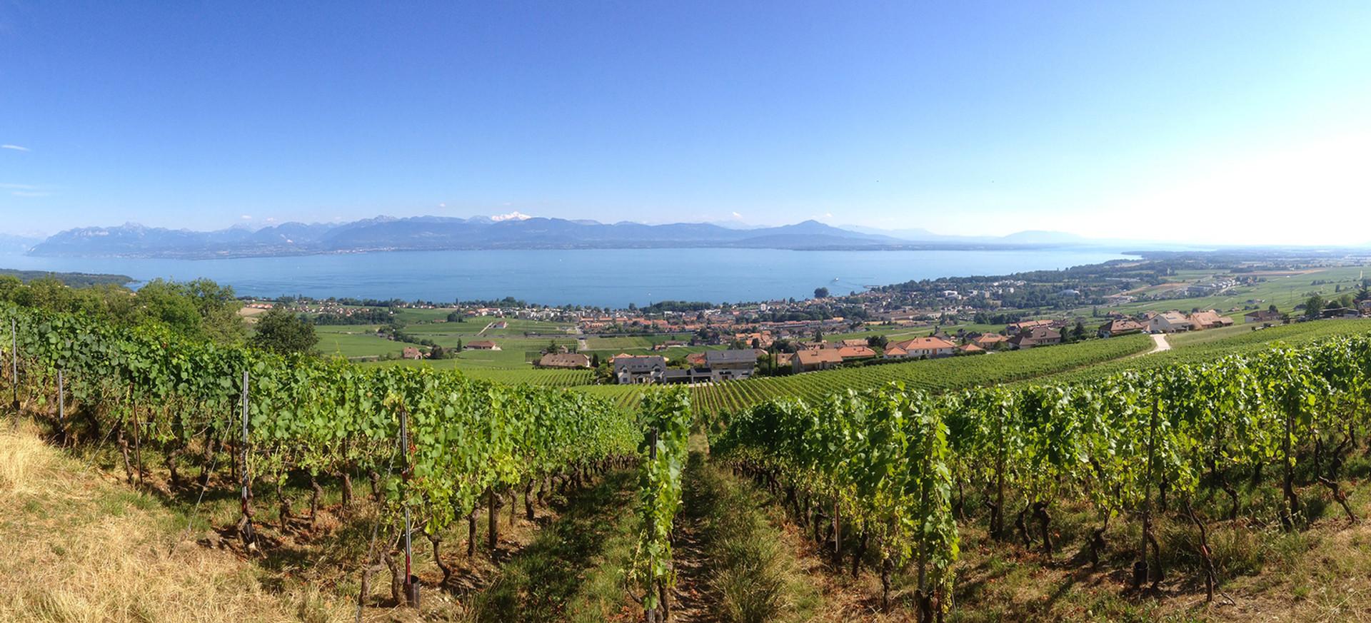domaine-La-grande-vigne-vins-suisses.jpg