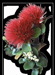 Lehuaflower.png