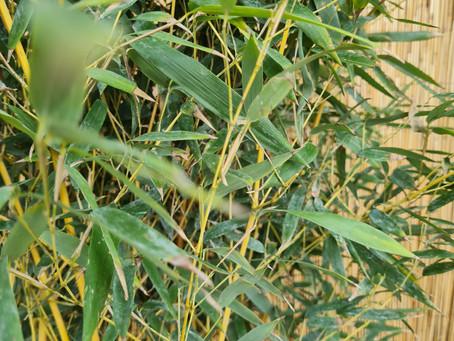 Thomas Writes: A Quick Update... Plants!