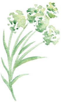 kisspng-green-petal-watercolor-painting-