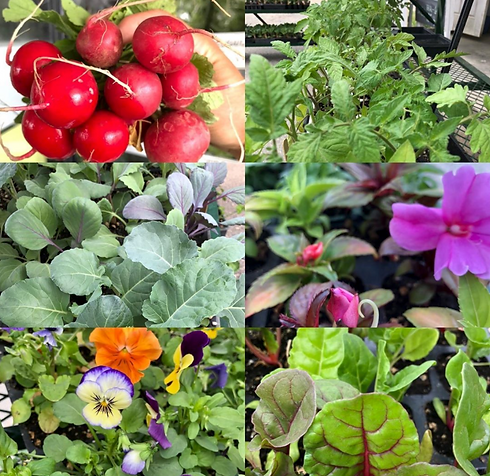 Longview Farm Stand Collage.png