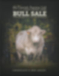 2019BullSale.jpg