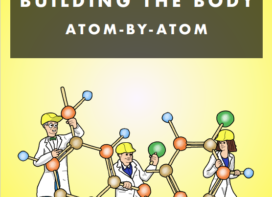 Building the Body - Atom by Atom