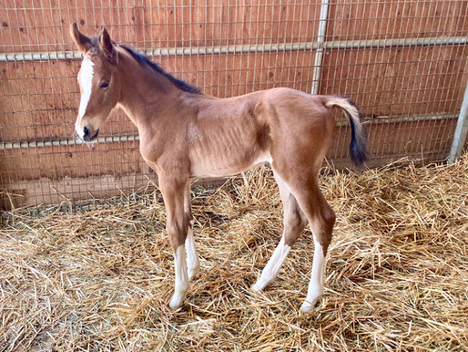 Welcome to Our First Foals of 2021