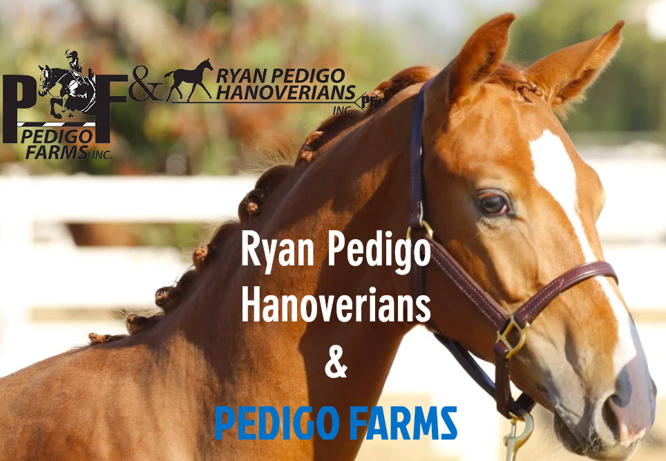 Ryan Pedigo Hanoverians