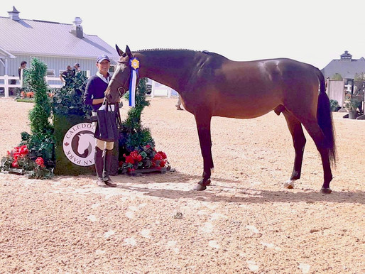 US Equestrian and USEF Show Jumping Sires & Hunter Sires 2021 Rankings....
