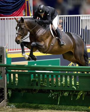 Diamo Blue at the Royal Horse Show