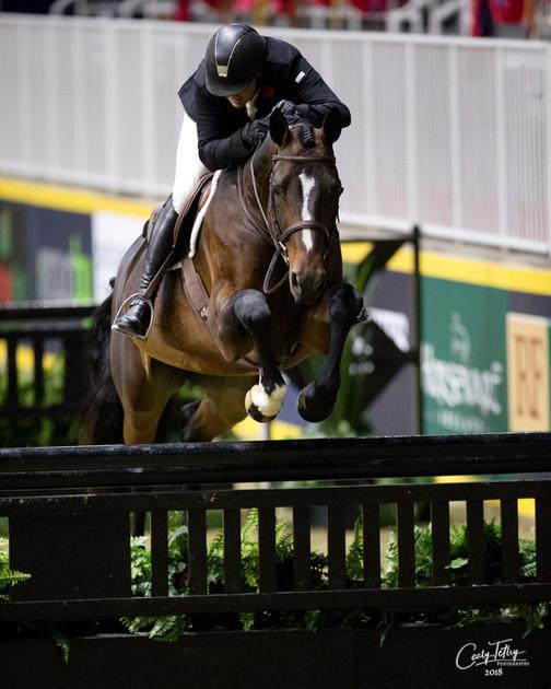 Diamo Blue Royal Horse Show
