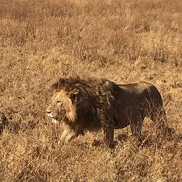 Zachary Abbott Safari