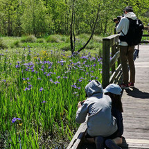 2021 iris bloom in the Bayou Sauvage refuge brought out crowds of people.