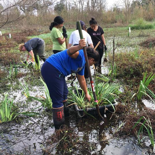 Bayou Sauvage refuge planting