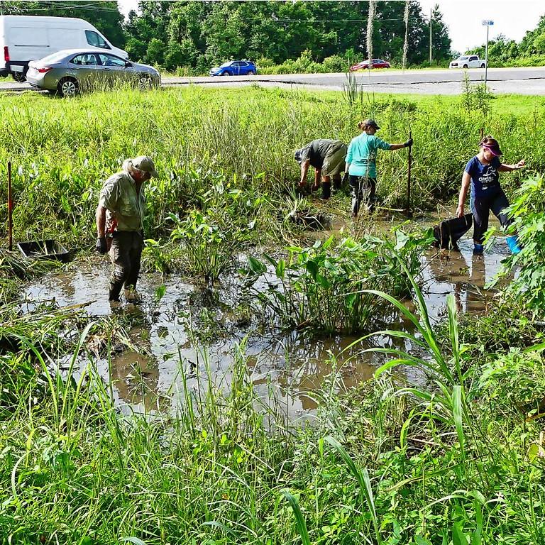 Louisiana iris rescue, Des Allemands
