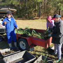 St. Joseph Abbey iris planting
