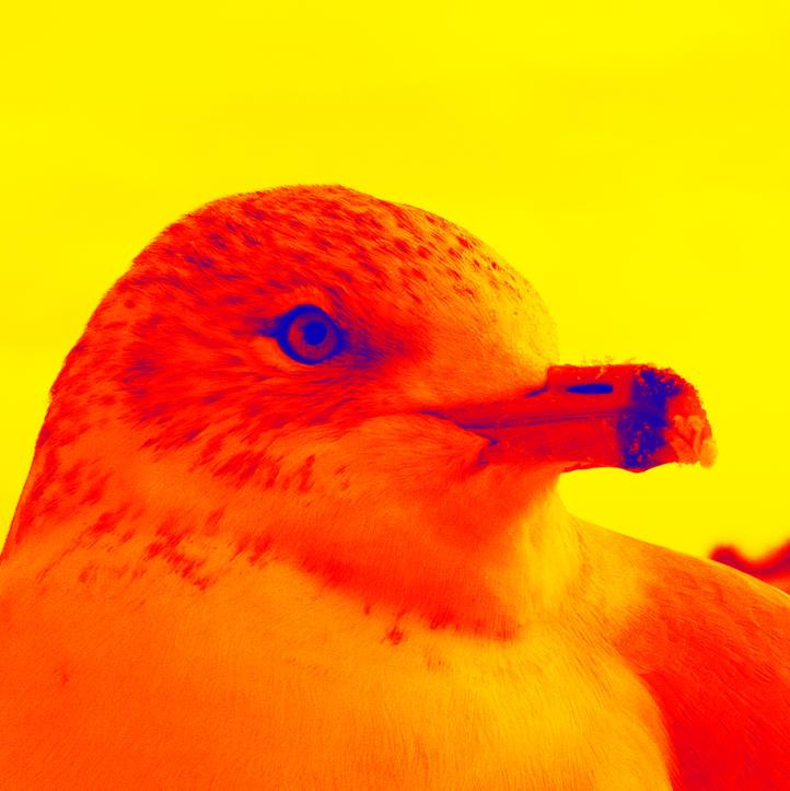Niagara Seagull 2.6.jpg