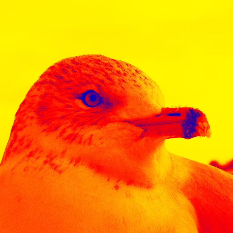 Niagara Seagull