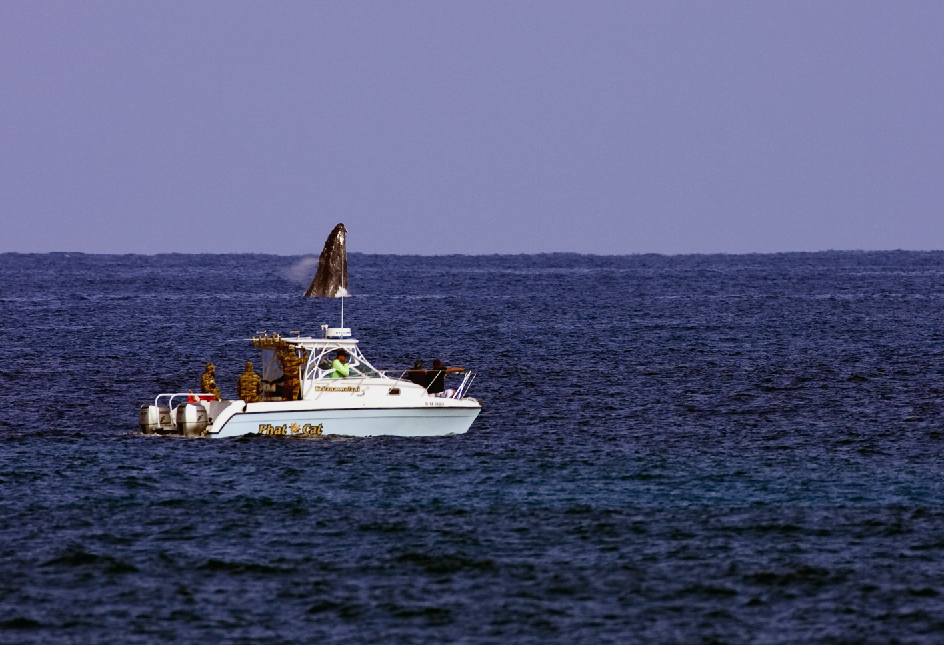Whale Jump Hawaii