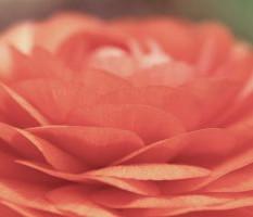 שושי גבאי – סדנת פרחי באך 16