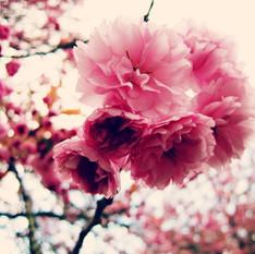 שושי גבאי – סדנת פרחי באך 10