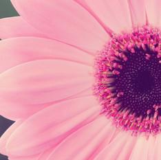 שושי גבאי – סדנת פרחי באך 6
