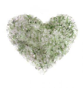 775615_flower_heart