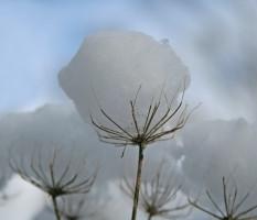 שושי גבאי – סדנת פרחי באך 18