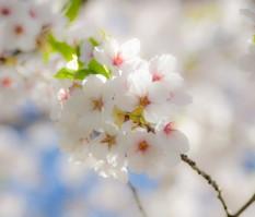 שושי גבאי – סדנת פרחי באך 11