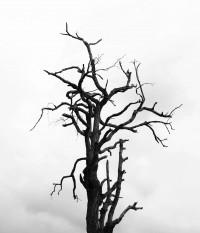 אמנות היראה | פרשת שמות | רחל וינשטיין