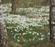 שושי גבאי – סדנת פרחי באך 19