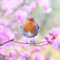 שמחה רבה, אביב הגיע פסח בא!