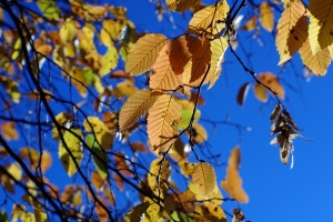 1405700_autumn_leafs