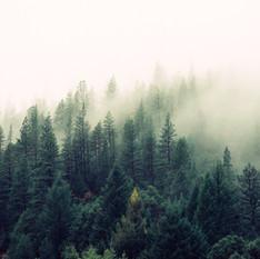 כוחה של תשובה – סיפור הצלה מיערות ארגנטינה | שושי גבאי