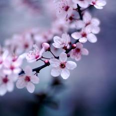 שושי גבאי – סדנת פרחי באך 5