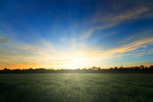 1405922_sunrise_on_fields