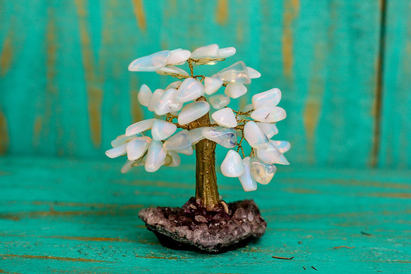Árvore Brilho Místico