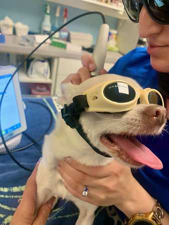 Animal Laser Therapy