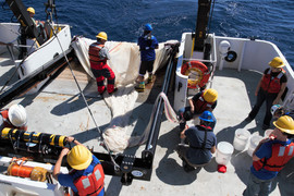 Processing MOCNESS samples (Gulf of Mexico)