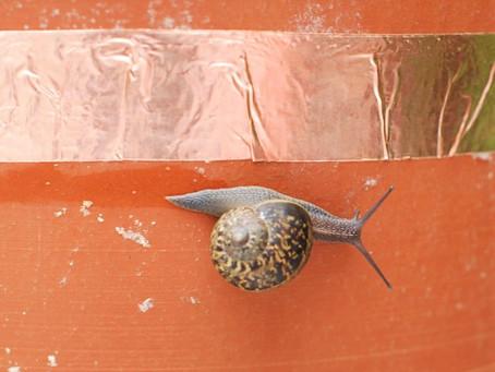 How does Copper Tape Stop Slugs?
