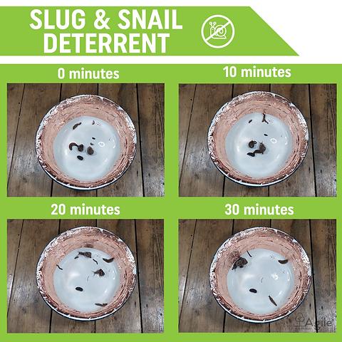 Slug and snail defence.png
