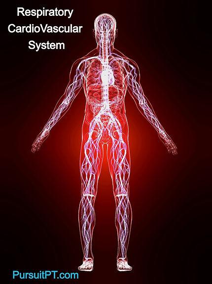 respiratory-cardiovascular-system_High_edited_edited.jpg