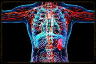 human scan of viscera