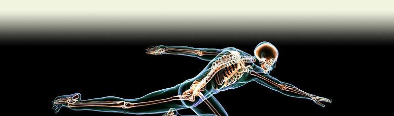 human skeleton reaching forward