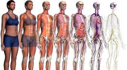 anatomy and physiology.jpg