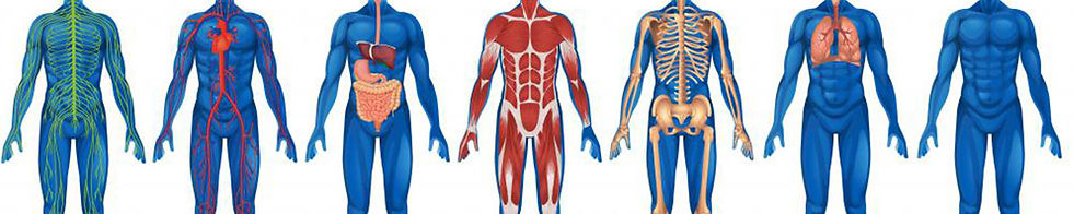 Anatomy-Physiology-1600x320.jpg