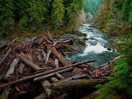 When Confronted with a Log Jam, Gain Some Perspective