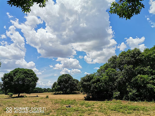 Nature shot from Huawei Nova 7i